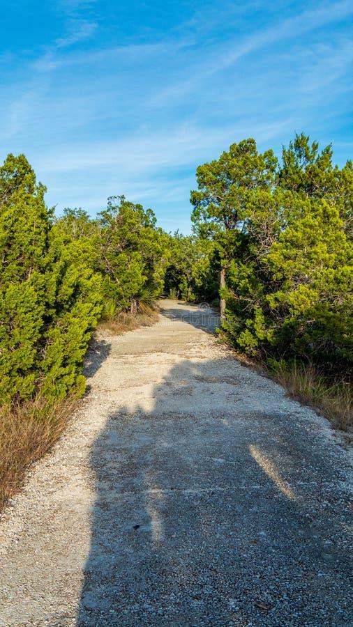 Het lopen van slepen in een stil, rustig, vreedzaam bospark met trillende groene bomen en vegetatie stock foto