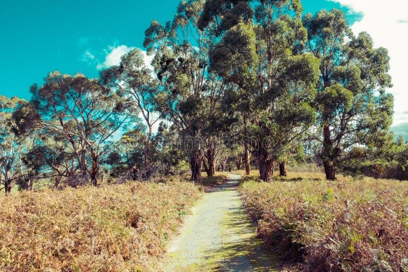 Het lopen van spoor die door inheemse Australische struik overgaan royalty-vrije stock fotografie