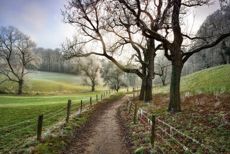 Het lopen van weg die in mooi landelijk landschap in de winter leiden stock afbeeldingen