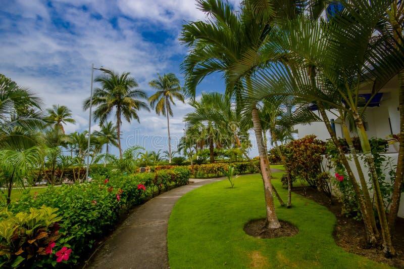 Het lopen van weg met palmen, binnen van een luxehotel in Zelfde, Ecuador stock foto's