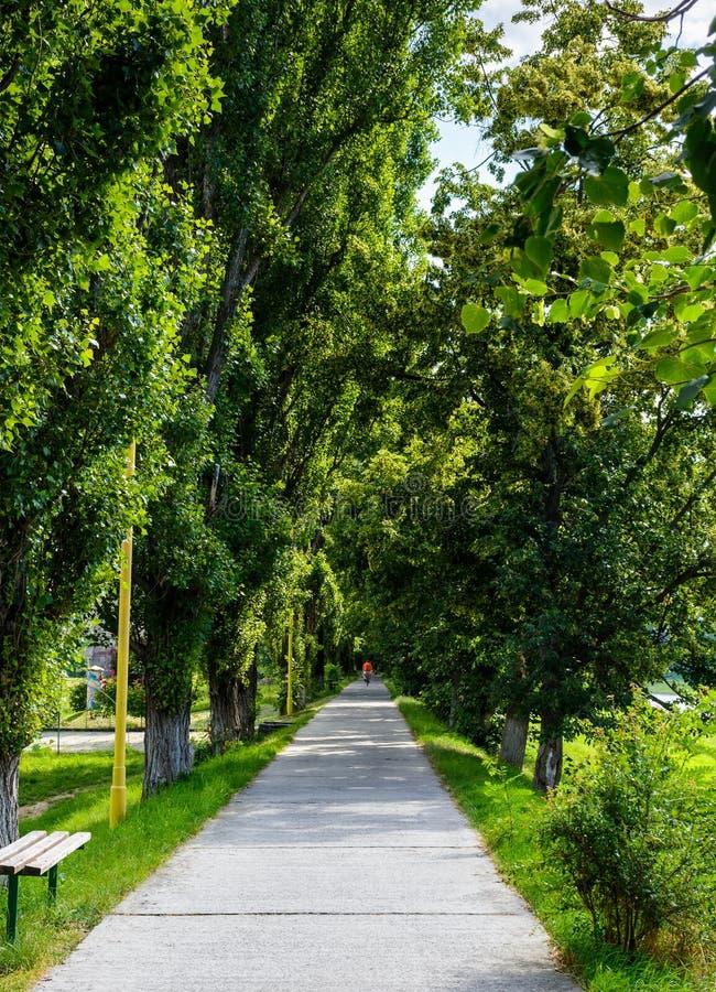 Het lopen van weg onder de kronen van de Lindeboom stock foto