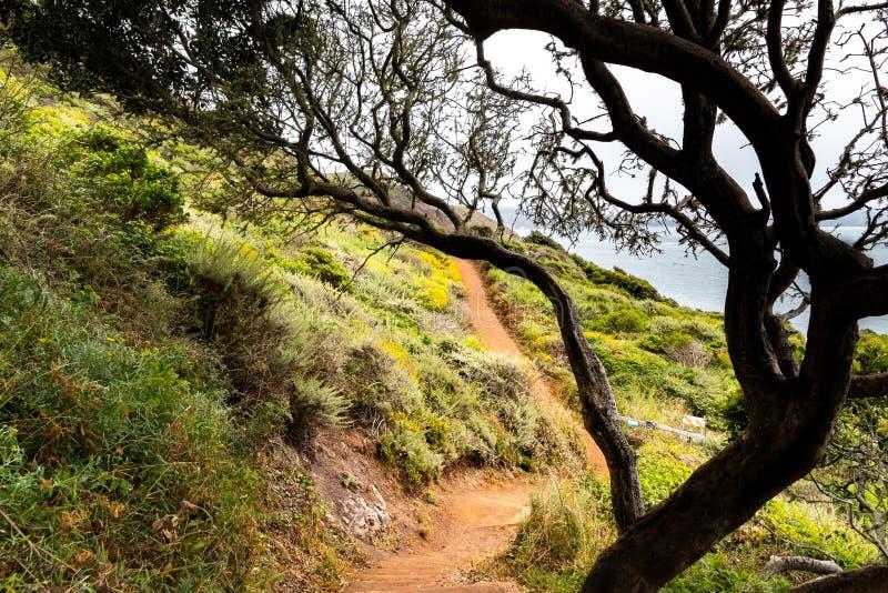 Het lopen van weg op de Vreedzame Oceaankustlijn; mistige dag; Marin Headlands, de baaigebied van San Francisco, Californië royalty-vrije stock fotografie