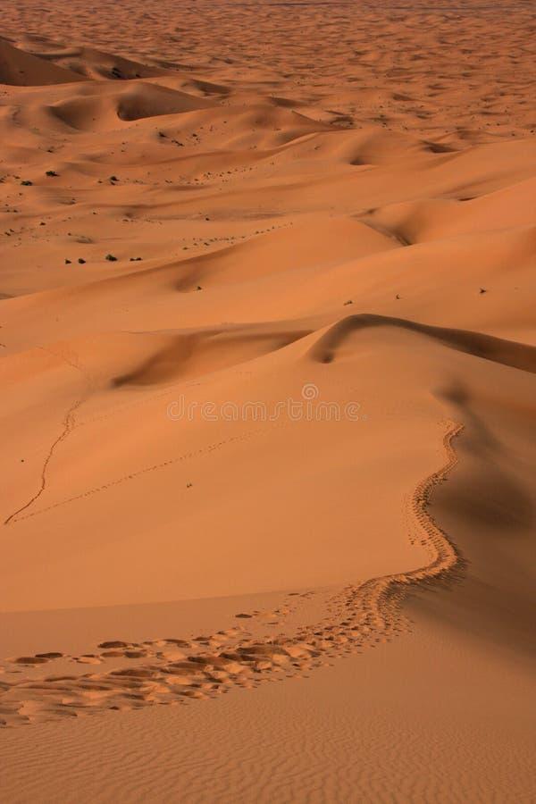 Het lopen van weg op het zand van de Sahara royalty-vrije stock afbeeldingen