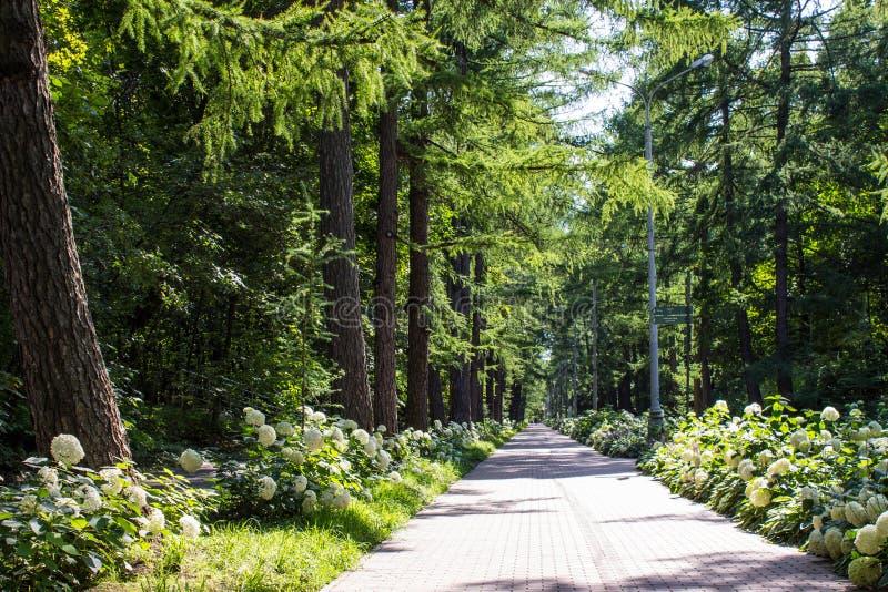 Het lopen van weg in het Park onder de bomen en de bloembedden op een de zomerdag stock afbeeldingen