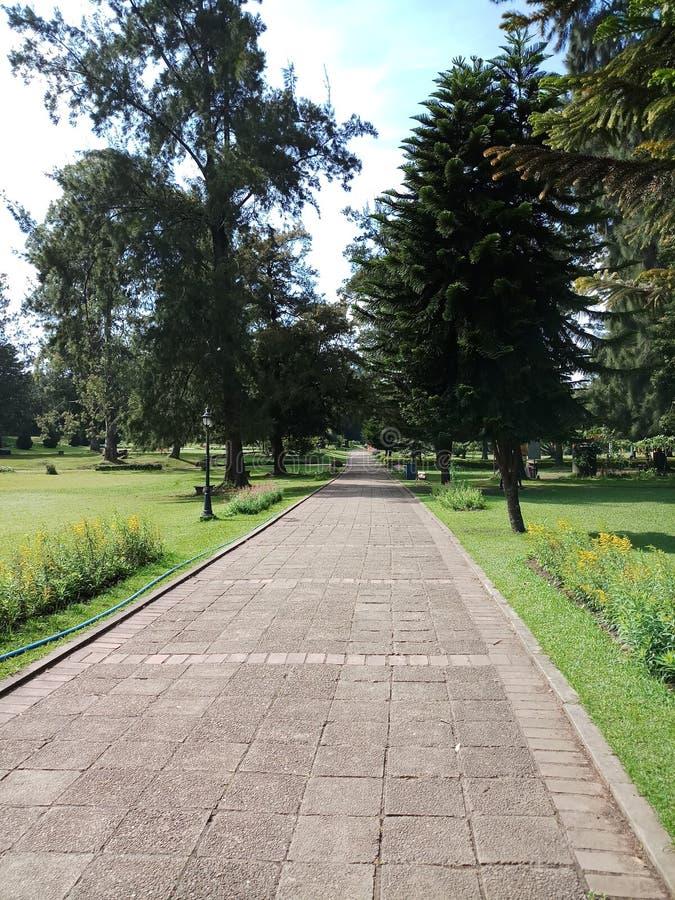 Het lopen wegen in botanische tuinen stock afbeelding