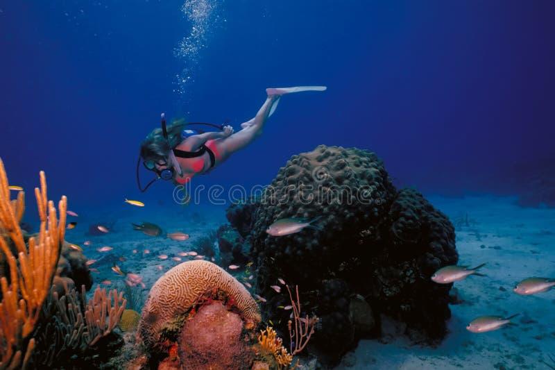 Het maagdelijke Meisje van de Scuba-uitrusting van Eilanden Caraïbische royalty-vrije stock foto
