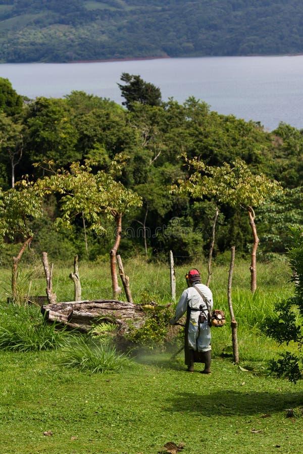 Het maaien in Costa Rica stock afbeeldingen