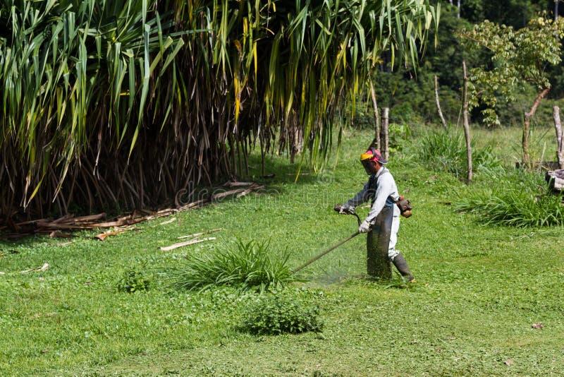 Het maaien in Costa Rica stock foto's