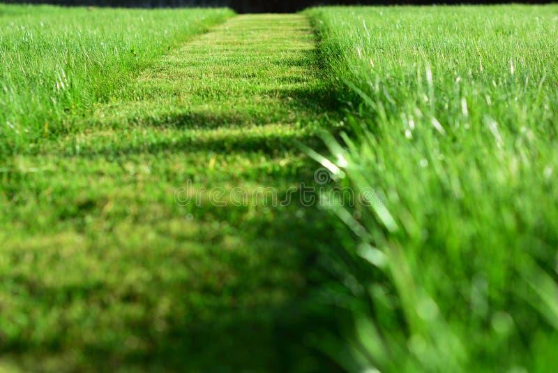 Het maaien van het Gazon Een perspectief van groen gras sneed strook stock foto's