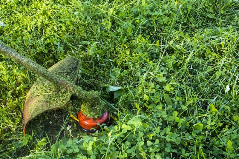 Het maaien van groen wild grasgebied die de maaimachine of de machts het gazonsnoeischaar met behulp van van het hulpmiddelkoord  royalty-vrije stock afbeelding