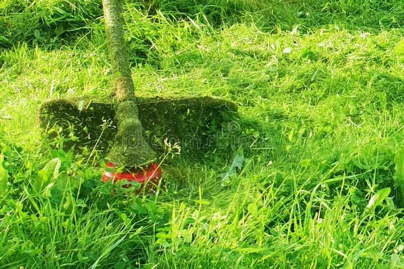 Het maaien van groen wild grasgebied die de maaimachine of de machts het gazonsnoeischaar met behulp van van het hulpmiddelkoord  stock foto's