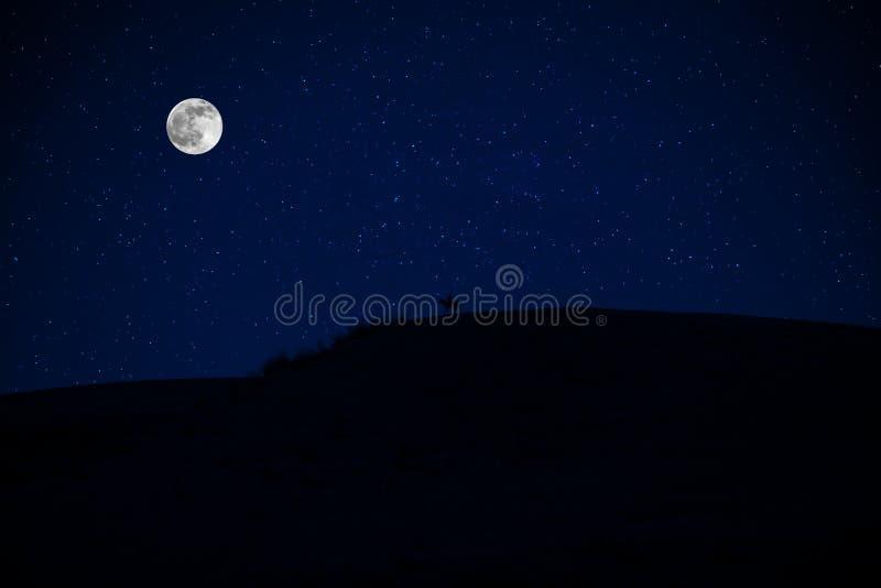 Het maanlicht van de fantasieverschrikking met silhouet van het donkere paard die omhoog grootbrengen royalty-vrije stock foto's