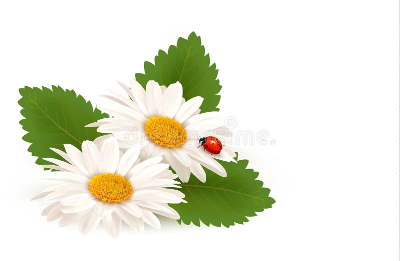 Het madeliefjebloem van de aardzomer met lieveheersbeestje. stock illustratie