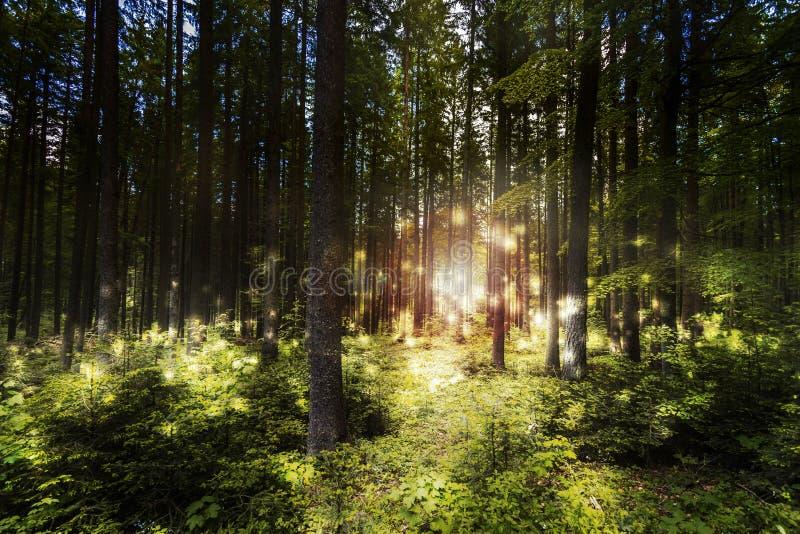Het magische bos van de droomscène stock fotografie