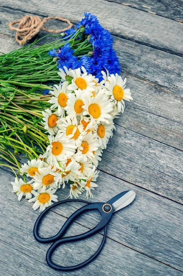 Het maken van een boeket van mooie wilde bloemen van madeliefjes en korenbloemen op een houten oude achtergrond stock afbeelding
