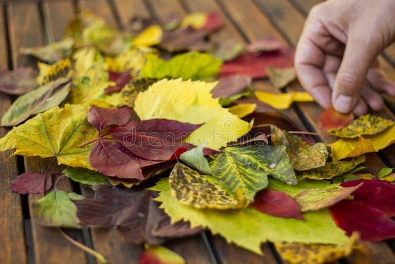 Het maken van een creatieve de herfst bcjground decoratie stock fotografie