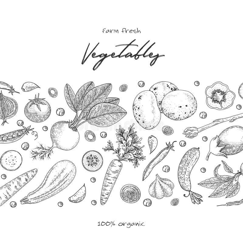 Het malplaatje van het natuurvoedingontwerp Verse product-groenten vegetables Hand getrokken illustratiekader met groenten Econat stock illustratie