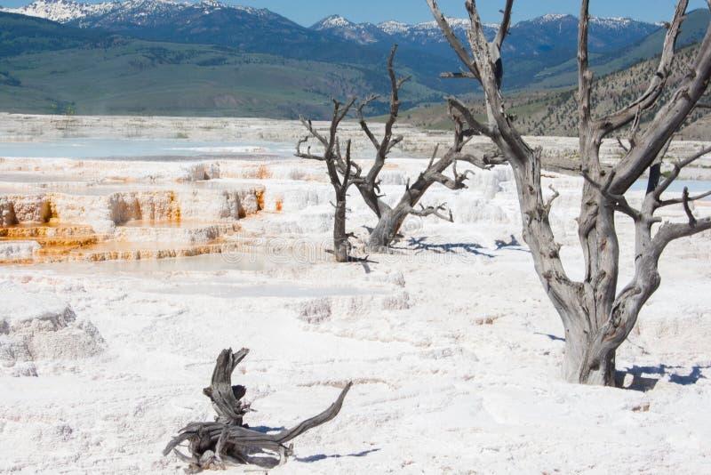 Het mammoet Hete gebied van de de Lentes Witte zwavelachtige rots in Yellowstone royalty-vrije stock fotografie