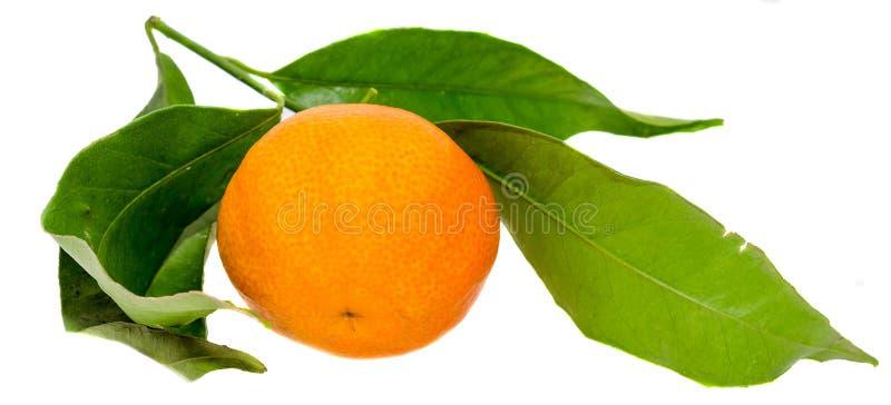 Het mandarijntje (Citrusvruchtenreticulata), als mandarin of mandarine, geïsoleerde, witte achtergrond ook wordt bekend die stock foto