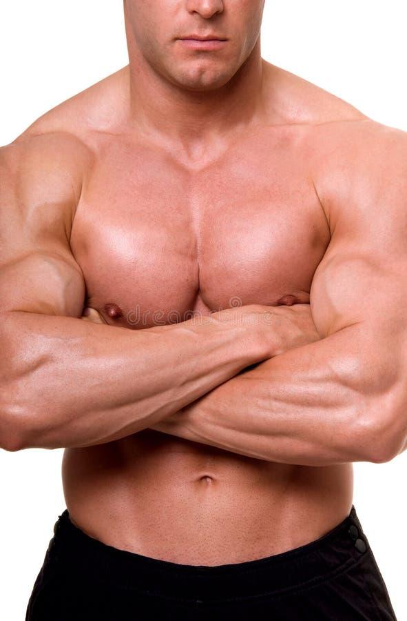 Het mannelijke lichaam. royalty-vrije stock afbeelding