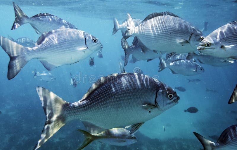 Het mariene leven in de Atlantische Oceaan op Cubaanse kust stock foto's
