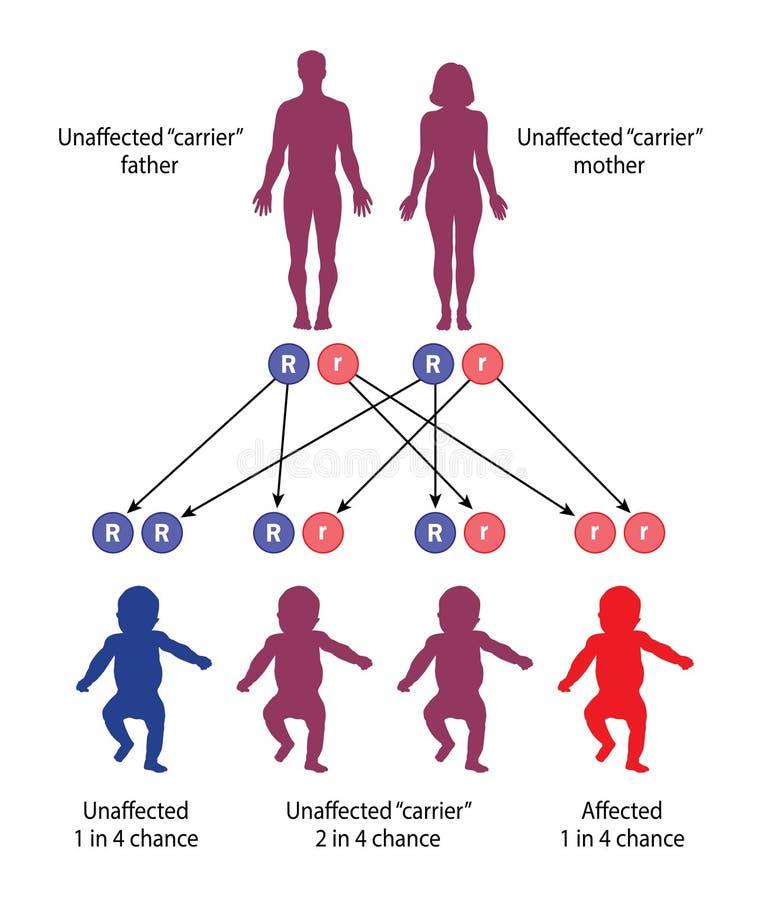 Het mechanisme van recessieve genetische ziekte royalty-vrije stock fotografie