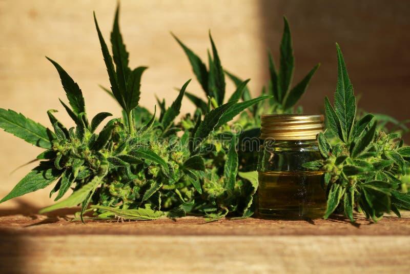 Het medische uittreksel van de cannabisolie en hennepinstallatie stock fotografie