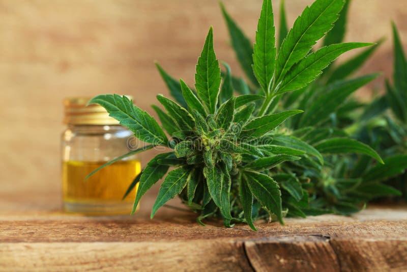 Het medische uittreksel van de cannabisolie en hennepinstallatie royalty-vrije stock foto
