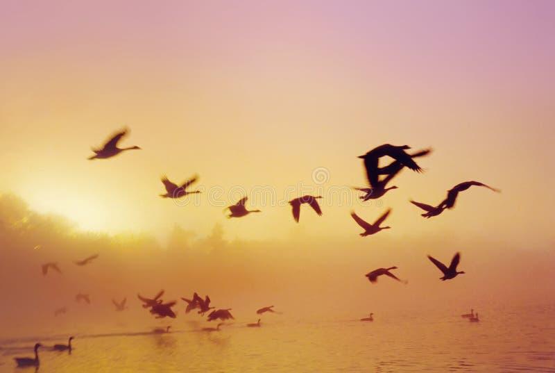 Het Meer D van de zonsopgang royalty-vrije stock afbeelding