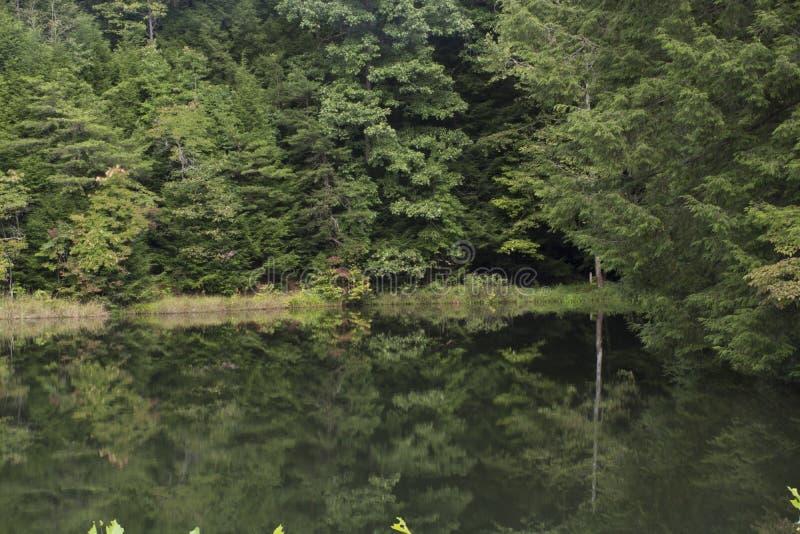 Het meer nam bezinningen toe royalty-vrije stock afbeeldingen