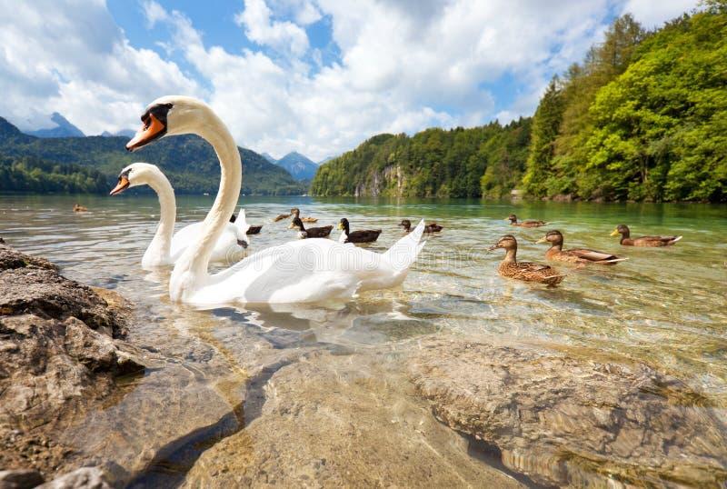 Het meer van alpen met vogels royalty-vrije stock foto