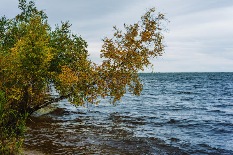 Het meer van Baikal in de herfst stock foto's