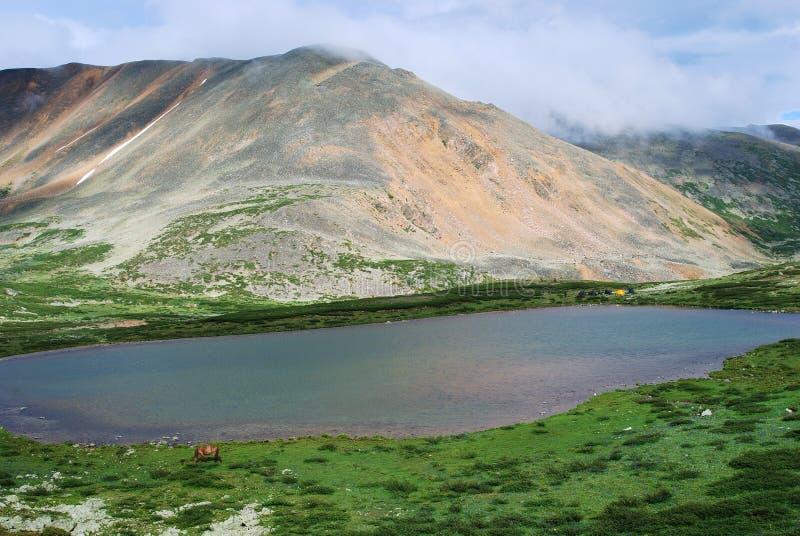 Het meer van de berg. Gorny Altai, Rusland royalty-vrije stock foto
