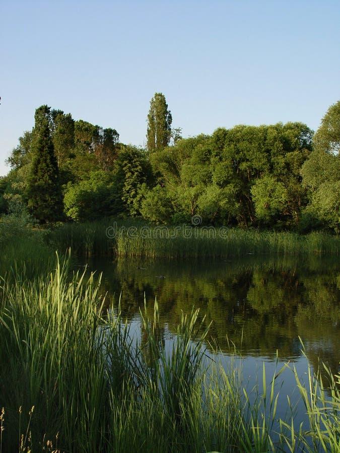 Het meer van de lente stock foto's