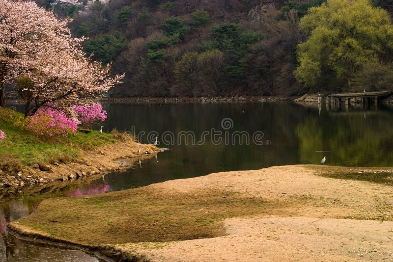 Het meer van de lente met reigers stock fotografie
