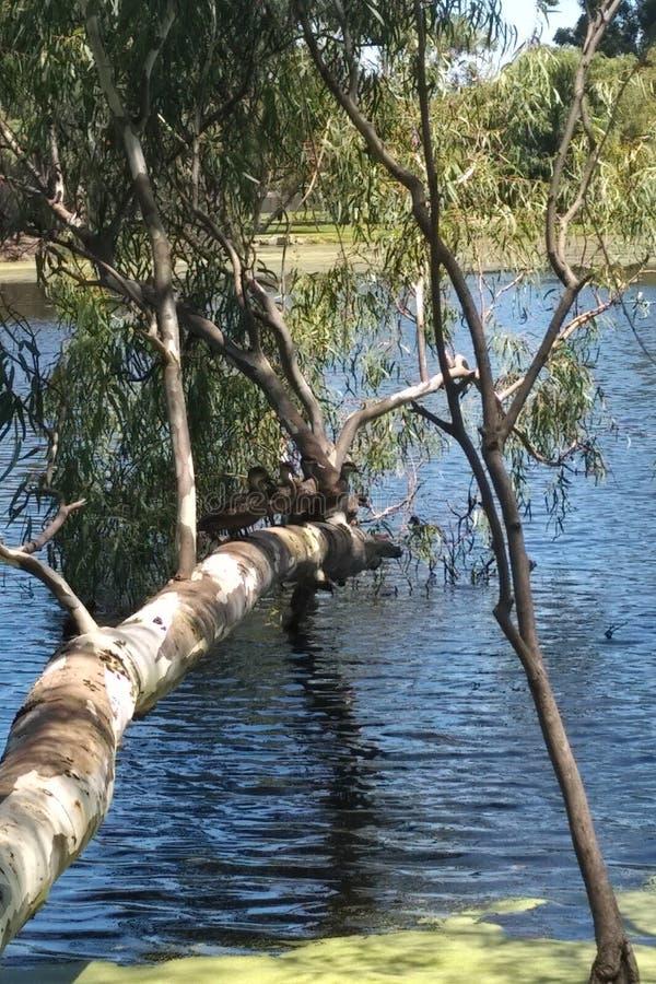Het meer van de het wildtomaat royalty-vrije stock fotografie