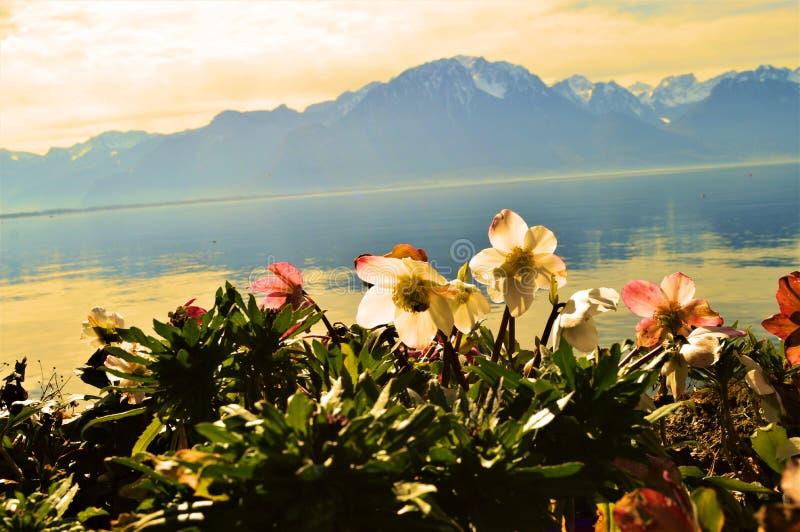 Het Meer van Genève en zonsondergang, Montreaux, Zwitserland, Europa royalty-vrije stock afbeelding