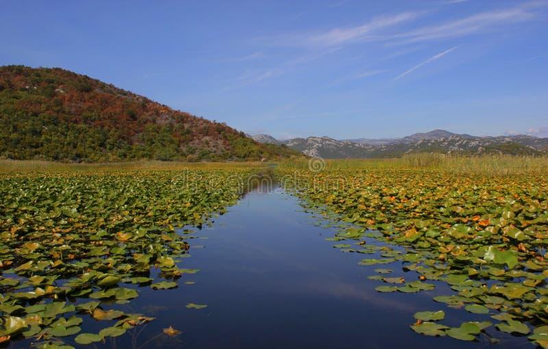 Het meer van Skadar stock foto's