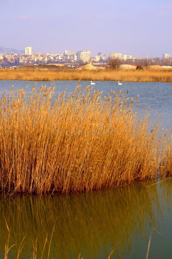 Het meer van Varna, Bulgarije stock fotografie