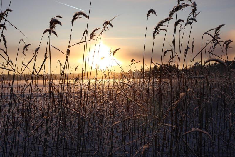 Het meerlandschap van de winter royalty-vrije stock afbeelding