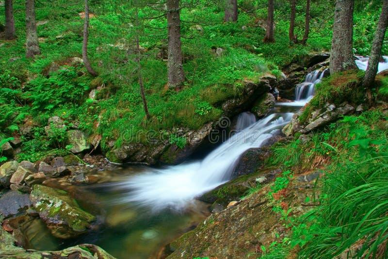 Het meeslepen van stroom in nationaal park Rila stock foto's