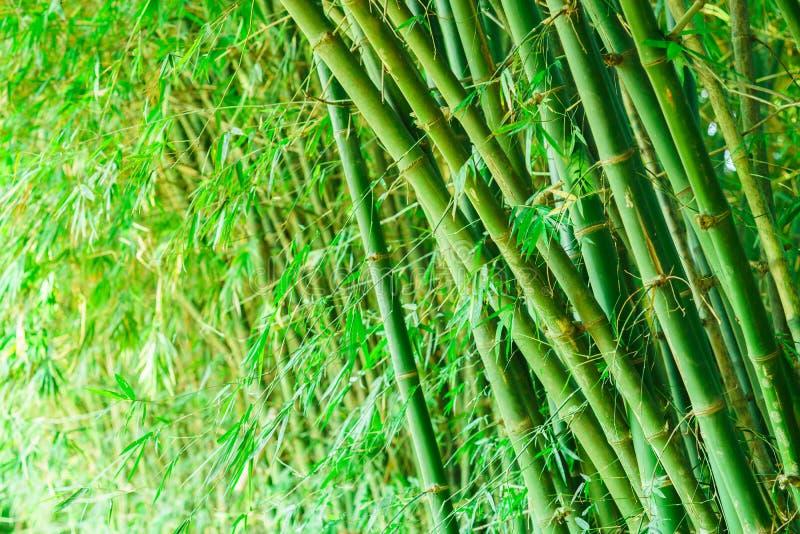 Het meest forrest bamboe stock foto's