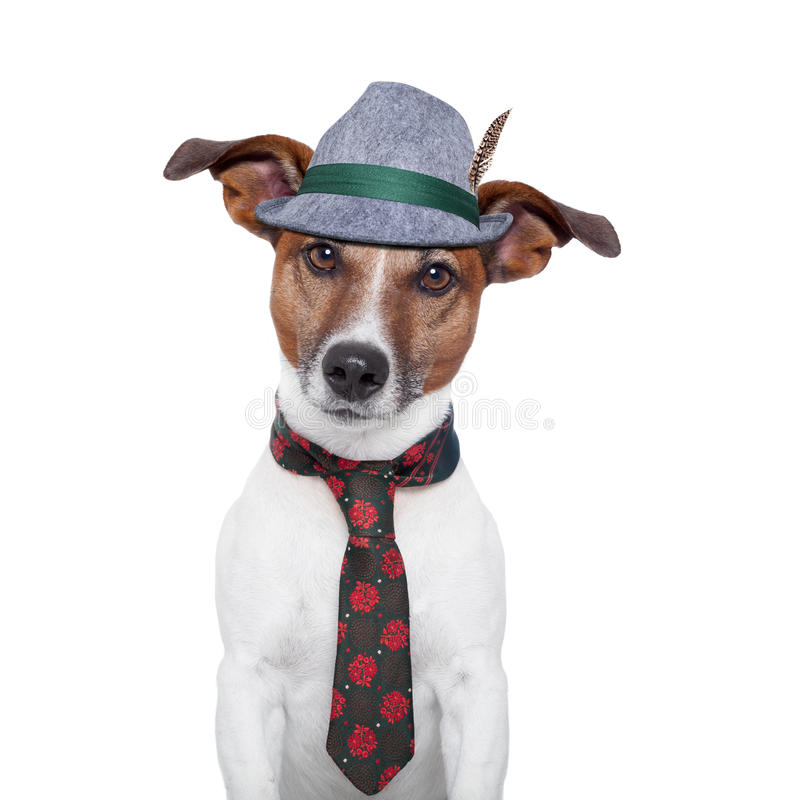 Het meest oktoberfest hond stock foto