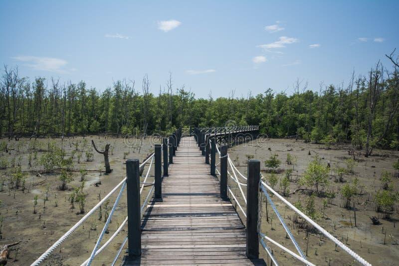 Het meest reforest mangrove royalty-vrije stock fotografie