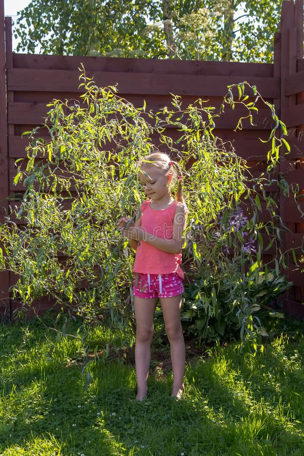 Het meisje bekijkt de bladeren op jonge wilg stock afbeeldingen