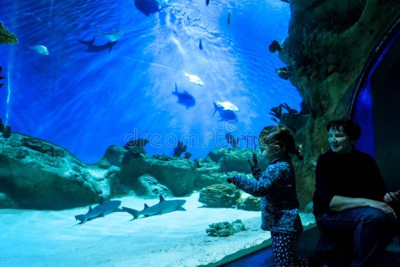 Het meisje bekijkt haaien in blauw aquarium stock foto