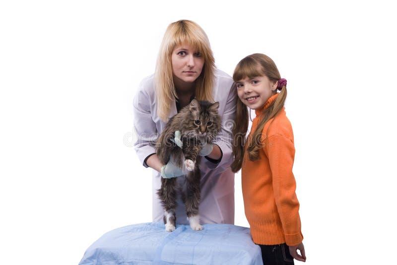 Het meisje brengt kat voor onderzoek door dierenarts royalty-vrije stock afbeelding
