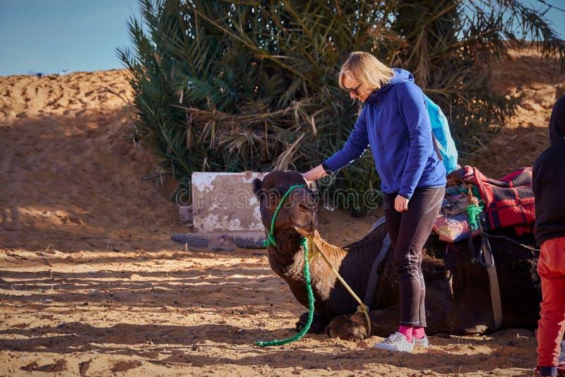 Het meisje die van de blondetoerist voor de reis op de kameel in woestijn voorbereidingen treffen royalty-vrije stock fotografie