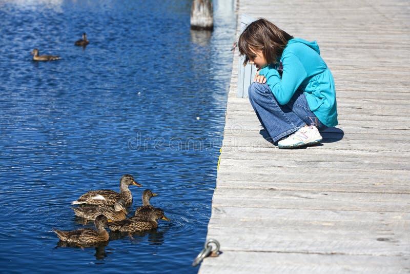 Het meisje en de eenden bekijken elkaar. stock foto