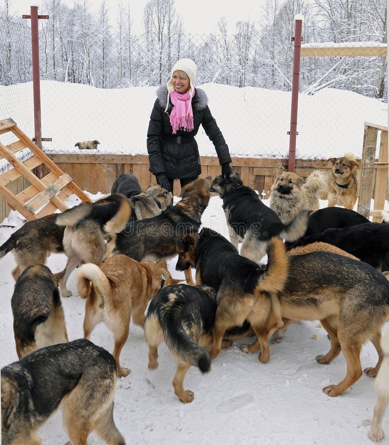 Het meisje en de honden royalty-vrije stock foto